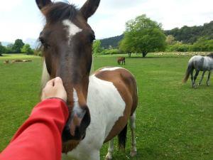cavall 1