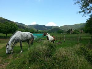 cavallls garrotxa