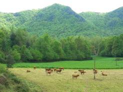 vaques garrotxa